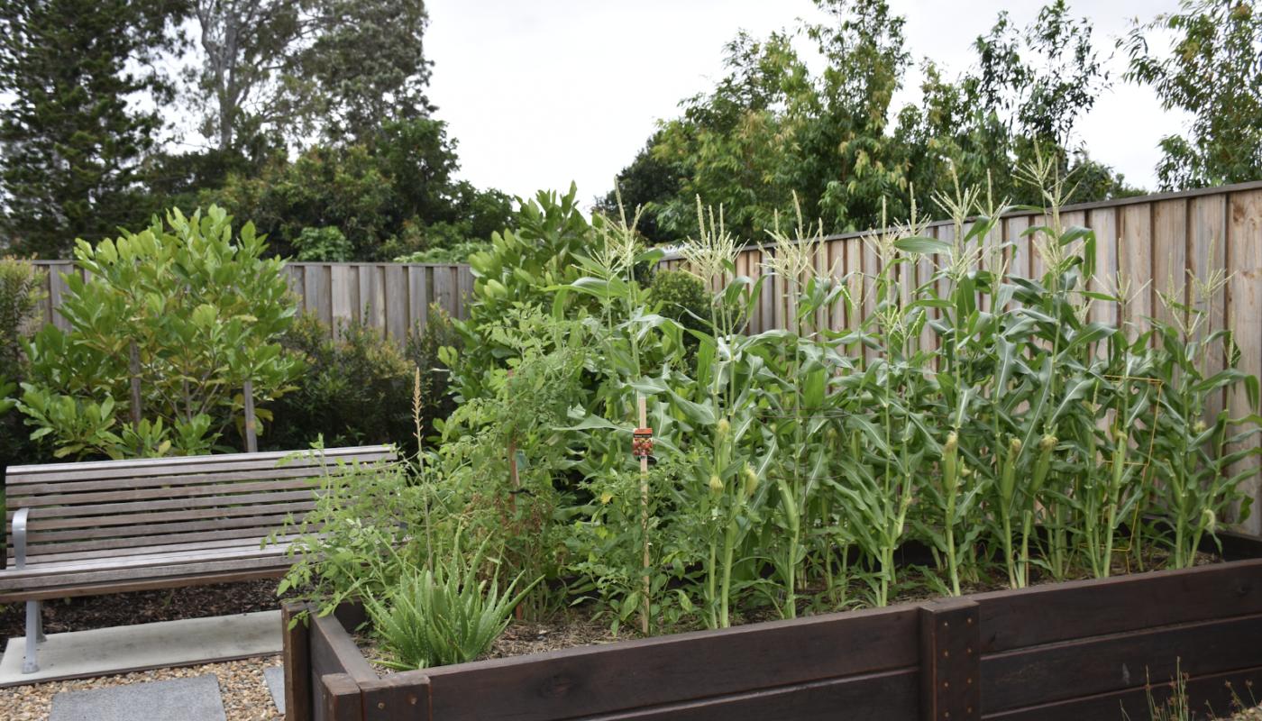 Anchorage Apartment Vegetable Garden